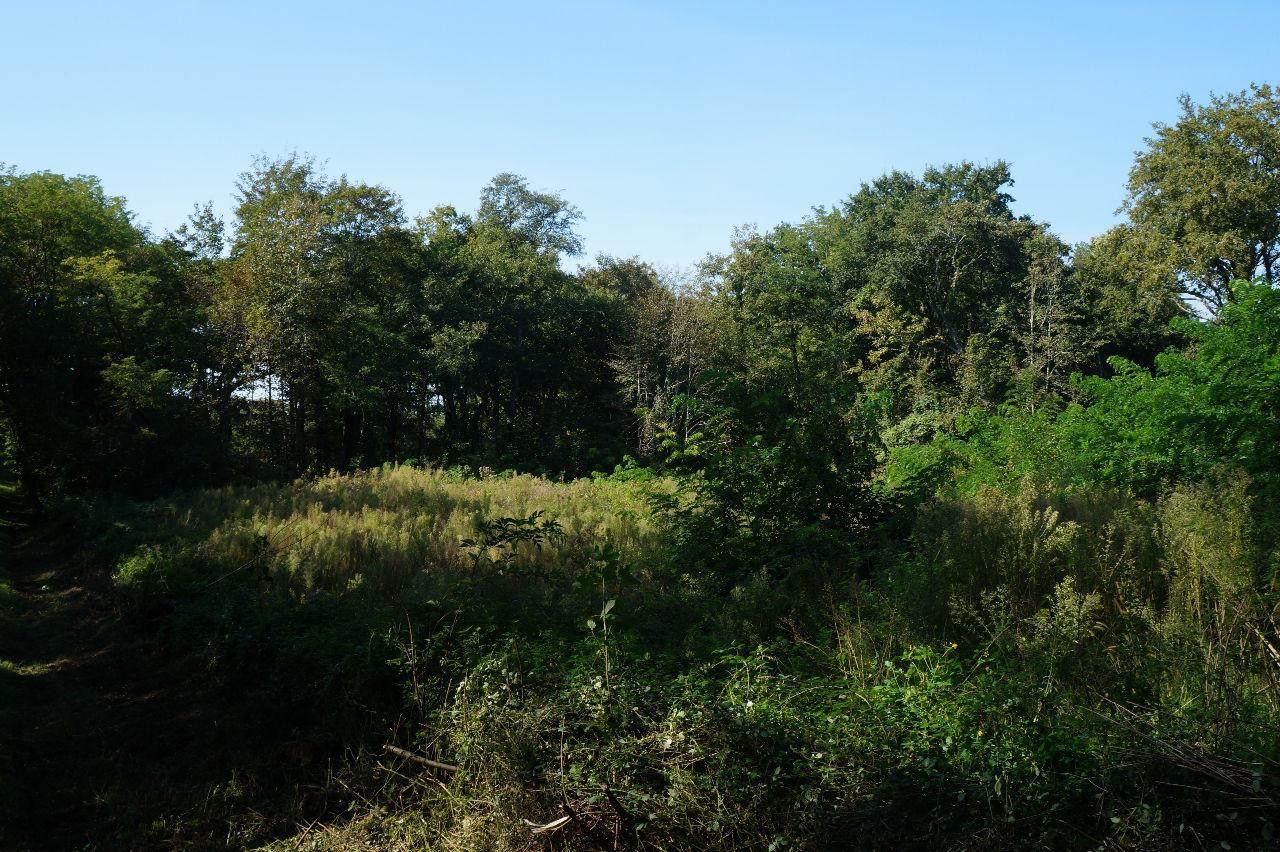 A VENDRE TERRAIN FORESTIER TARTAS PROCHE