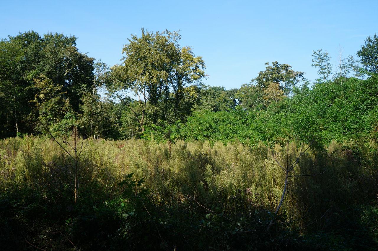 A VENDRE TERRAIN FORESTIER TARTAS