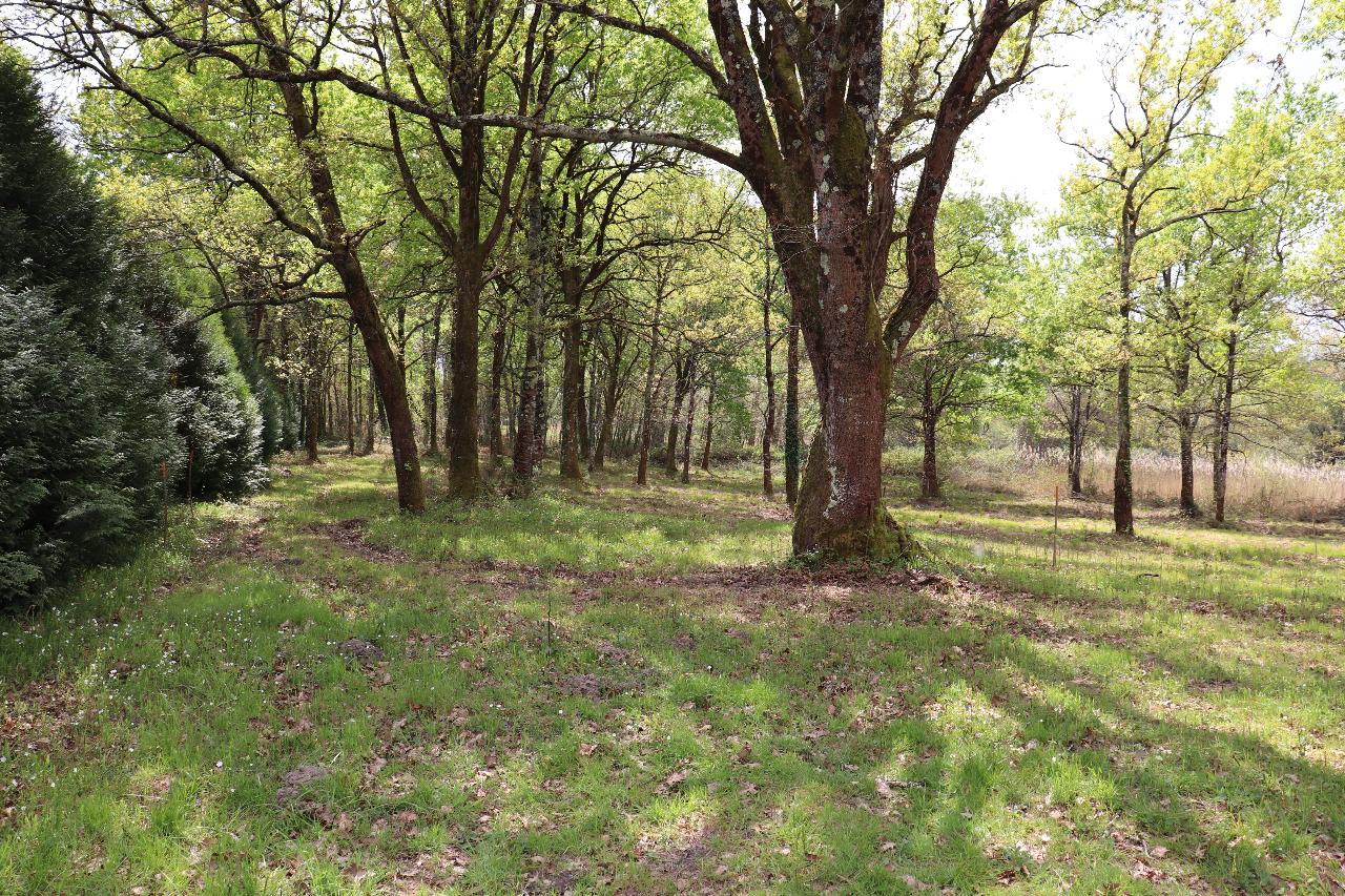 VENTE TERRAIN FORESTIER TARTAS PROCHE